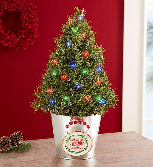 Wishing You a Rosemary Christmas
