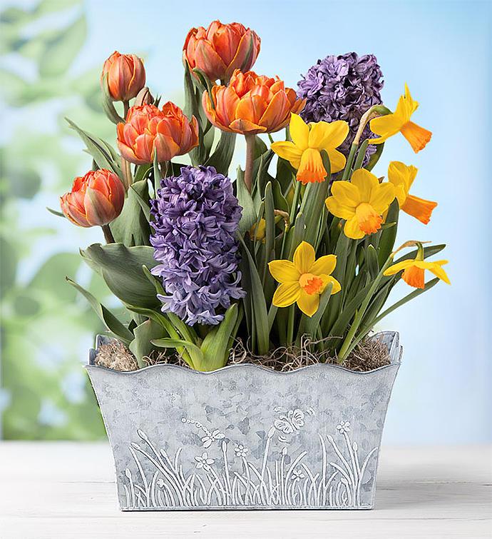 Bountiful Blooms Bulb Garden