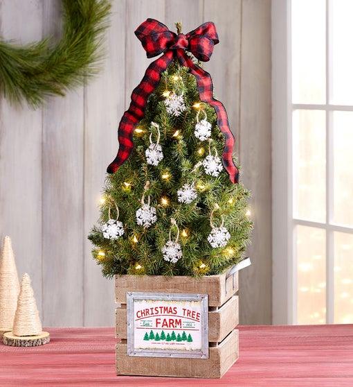 Christmas Tree Farm Spruce