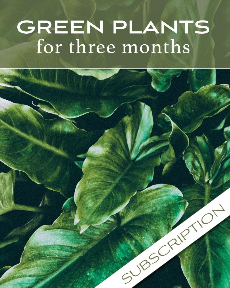 Plant Subscription (3)