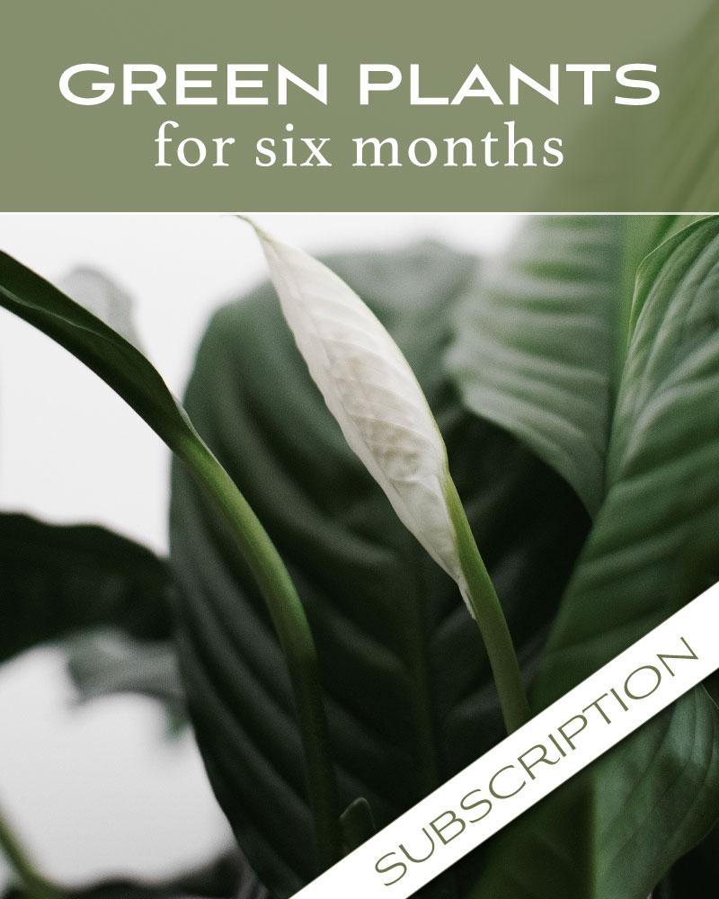 Plant Subscription (6)