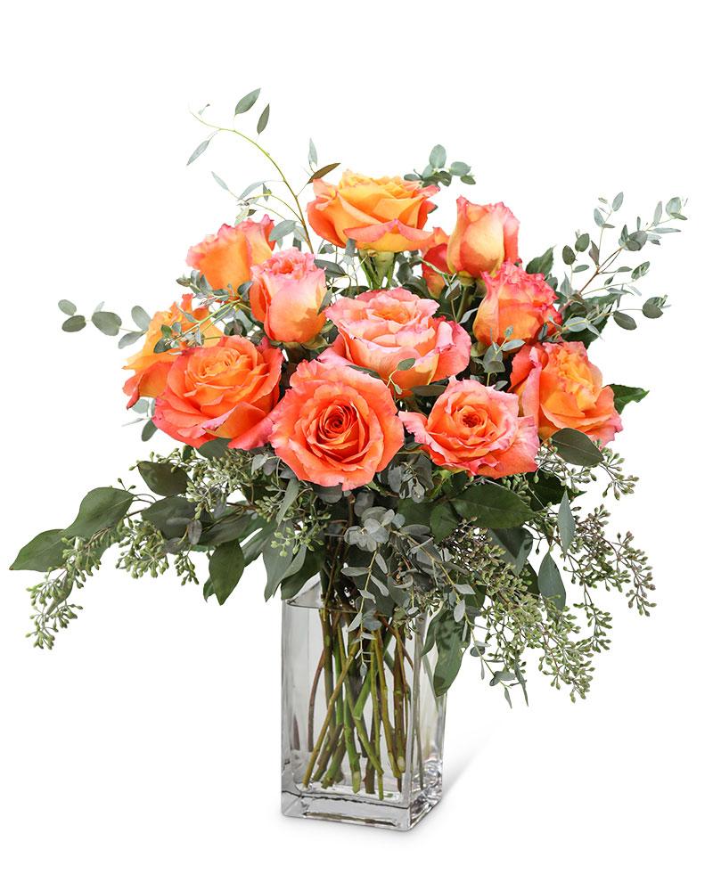 Free Spirit Roses (12)