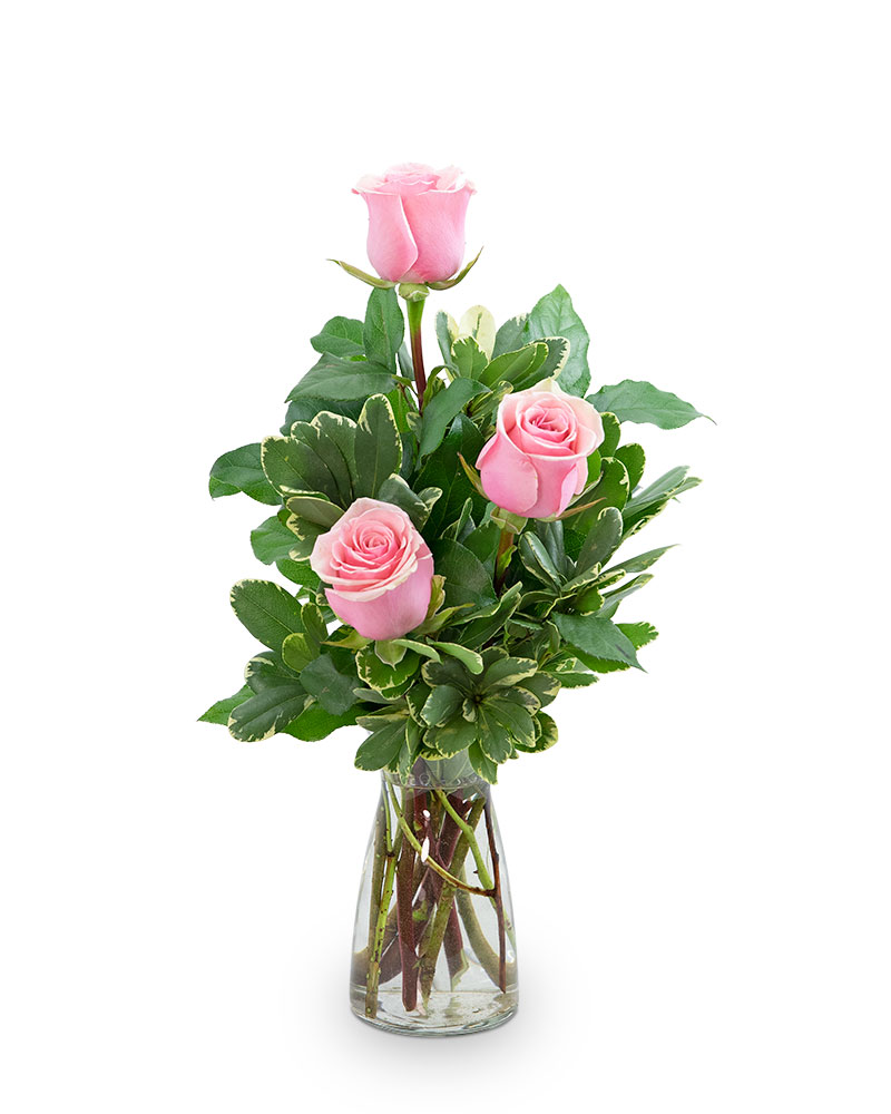 Pink Roses (3)