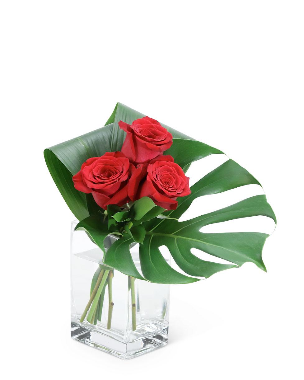 Modern Roses (3)