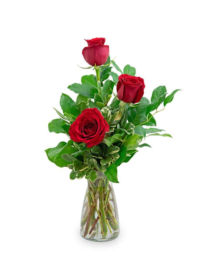Red Roses (3)