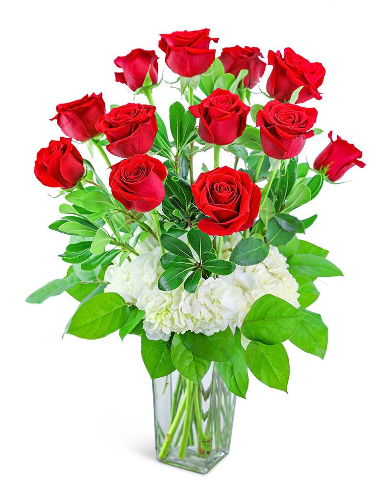 One Dozen Red Roses with Hydrangea