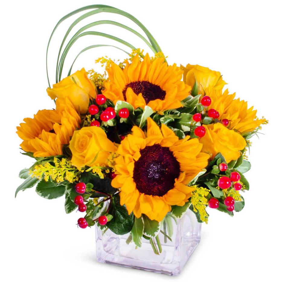Sunflower Glory