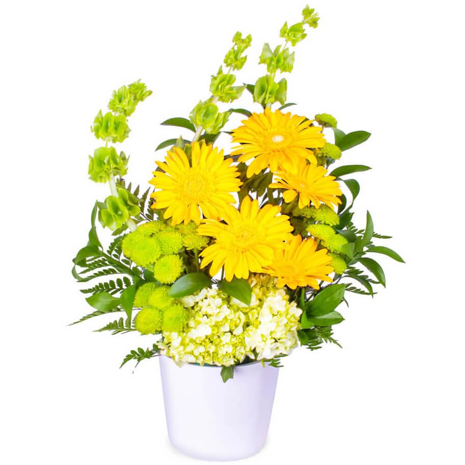 Yellow Gerber Love