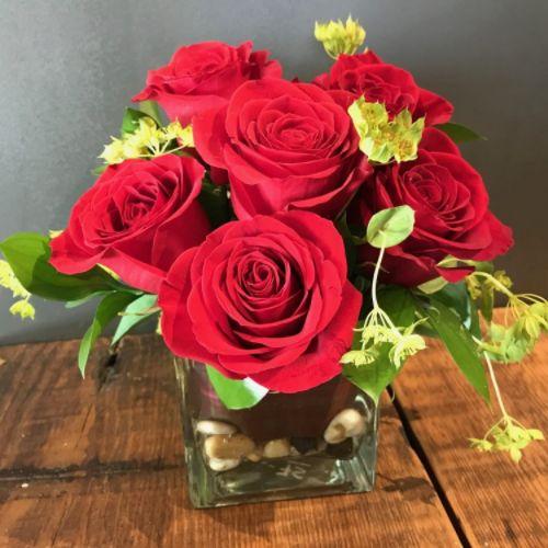 Hershey Rose