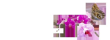 Blue Ridge Florist WNC ~  Marion / Black Mountain